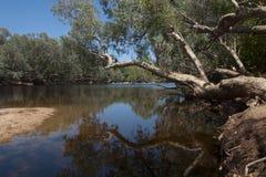 Billabong australiano fotografía de archivo