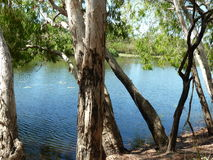 Billabong, Cape York Peninsula Stock Photos