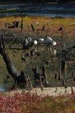 Billabong desecado Foto de archivo libre de regalías