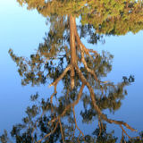 Billabong reflection Stock Photo