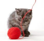 Bille de chaton et d'amorçage Images libres de droits