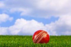 Bille de cricket sur l'herbe Image libre de droits