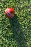 Bille de cricket sur l'herbe Photographie stock libre de droits