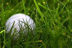 Bille de golf perdue Photo stock
