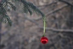 Bille de Noël dans une forêt de l'hiver Image libre de droits