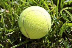 Bille de tennis sur l'herbe verte Images stock