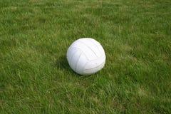 Bille sur l'herbe. images stock