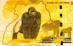 Billete de banco de la moneda de África Imágenes de archivo libres de regalías