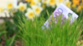 Billete de banco euro que crece en hierba