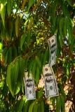 Billets d'un dollar Photos libres de droits