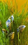 Billets d'un dollar dans l'herbe verte Image stock