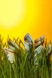 Billets d'un dollar parmi l'herbe verte Photographie stock libre de droits