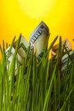 Billets d'un dollar s'élevant dans l'herbe Photos libres de droits