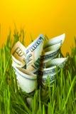 Billets d'un dollar s'élevant dans l'herbe verte Image stock