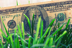 100 billets d'un dollar s'élevant dans l'herbe verte, concept financier de croissance Photographie stock libre de droits