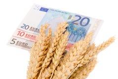 Billets de banque d'oreilles mûres de récolte de blé euro d'isolement Photographie stock