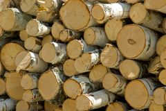 Billettes pour le bois de chauffage du bouleau Photographie stock