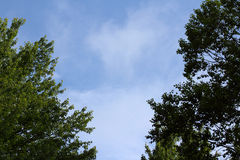 Billowing Clouds Amongst Trees Stock Photo