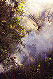 Billowing smoke from forest fire Royalty Free Stock Photos