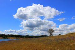 Billowy Clouds. With a bright blue sky and flowers in the foreground Royalty Free Stock Images