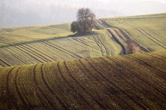 Billowy field. With the young crops Royalty Free Stock Photos