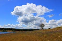Billowy Wolken lizenzfreie stockbilder