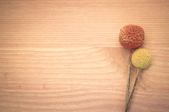 Billy buttons on a light wood background. Two dried billy buttons on a light wood background Royalty Free Stock Photo