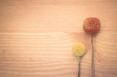 Billy buttons on a light wood background. Two dried billy buttons on a light wood background Stock Images