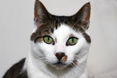 Billy Cat Stockfoto
