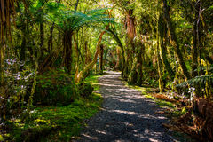 Billy Falls Track d'hurlement, situé dans le parc national aspirant de Mt, le Nouvelle-Zélande photos libres de droits