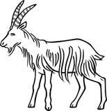 Billy Goat Fotografia Stock