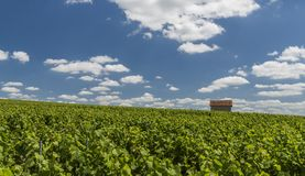 Billy-Le-Grand Vineyard. S with small house on a summers day in Champagne-Ardenne, Champagne district, France Stock Photo