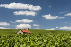 Billy-Le-Grand Vineyards and Clouds. Billy-Le-Grand Vineyards with small house and clouds on a summers day in Champagne-Ardenne, Champagne district, France Royalty Free Stock Images