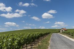 Billy-Le-Grand Vineyards and Road. Billy-Le-Grand Vineyards with small house and road on a summers day in Champagne-Ardenne, Champagne district, France Royalty Free Stock Images