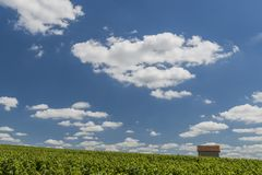 Billy-Le-Grand Vineyards. With small house on a summers day in Champagne-Ardenne, Champagne district, France Stock Image