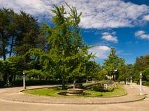Biloba de los Ginkgos en el parque de Compostela Foto de archivo libre de regalías