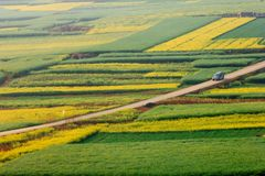 Bilridning till och med att blomma canolafält royaltyfri foto
