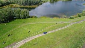 Bilritterna längs vetefälten Härligt landskap från höjden Foto från en höjd Royaltyfria Foton