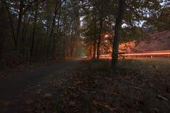 Bilsvansljus skuggar i den härliga hösten färgad skog royaltyfria foton
