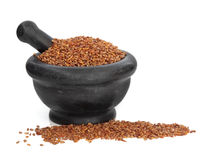 Bilta Seed Herb Royalty Free Stock Image