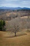 Biltmore nieruchomości ziemie Zdjęcie Royalty Free