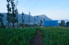 :: BIMA SAKTI:: BimaDesa Ngadisari, Probolinggo, Jawa Tamerlán fotografía de archivo libre de regalías