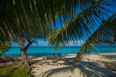 Bimini Island Palms. Bimini Island along the beach with trees and rocks. Beautiful blue waters with palm fawns in the foreground Royalty Free Stock Photo
