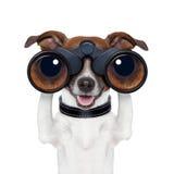 Binóculos que procuraram a vista observando o cão