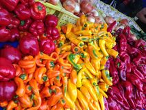 Bin of colorful peppers Stock Photography