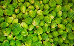 Bin Full of Brussell Sprouts Stock Image