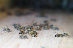 Bin går omkring på yttersida av väggen av bikupan, selektiv fokus arkivbild