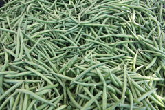 Bin of green beans Royalty Free Stock Images