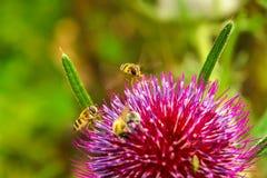 Bin och blomma Fotografering för Bildbyråer