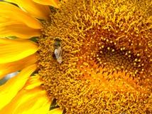 Bin och blommor Royaltyfri Foto